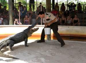 aligator-show3